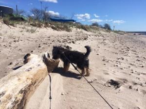 Dex the dog är 2 skitar hög o väger 3,5 kg.